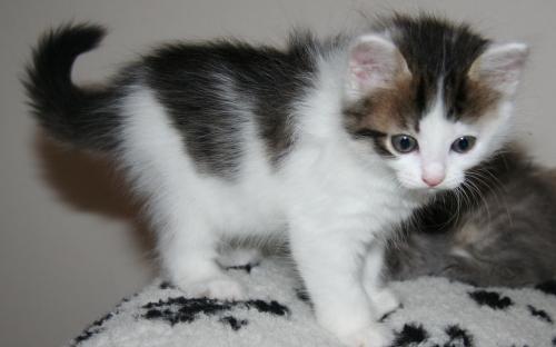 Кошечка Кнопа на пятнистом пледе
