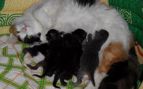 Фото: котята сосут молочко