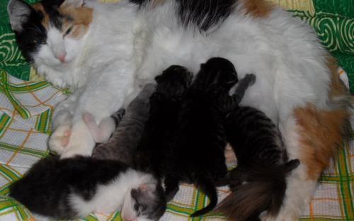 Котята кормятся