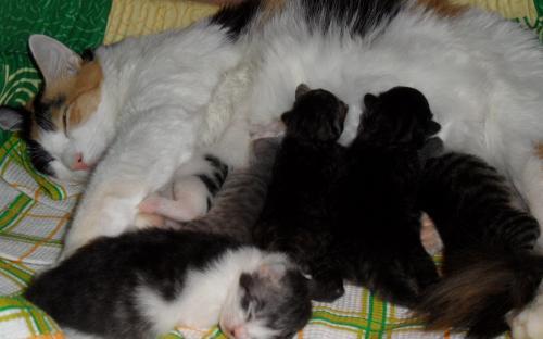 Котята спят и едят
