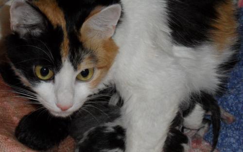 Фотография кошки и котят
