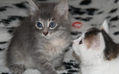 Фотография милых котят на пледе