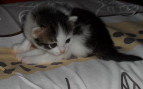 Фотография: милая маленькая кошечка