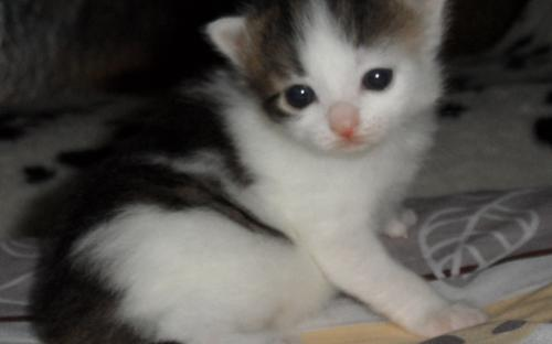 Котенок в три недели